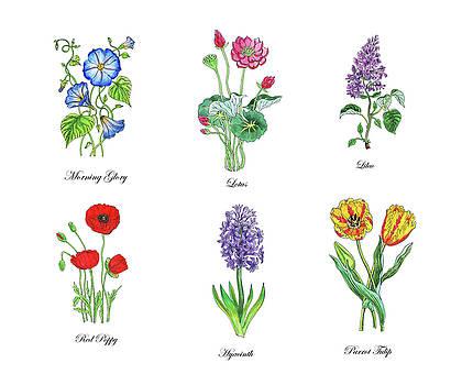Irina Sztukowski - Botanical Watercolor Flowers Collection III