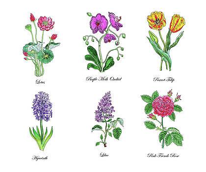 Botanical Watercolor Flowers Collection IV by Irina Sztukowski