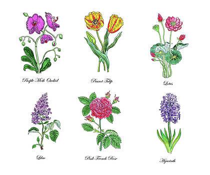 Irina Sztukowski - Botanical Watercolor Flowers Collection V
