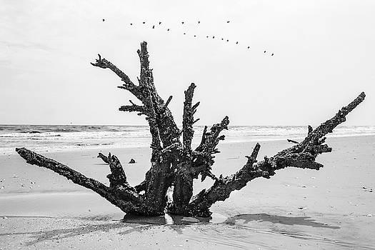 Botany Bay by Don Mennig
