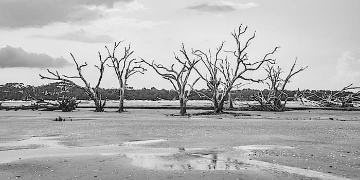 Botany Bay - Still Standing by Don Mennig