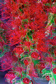Bottlebrush Bloom Awakening by Debby Pueschel