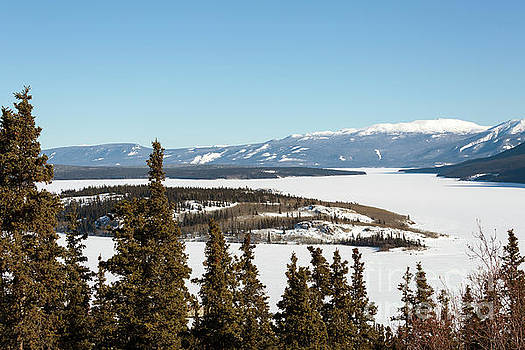 Bove Island on Windy Arm in Tagish Lake Yukon by Louise Heusinkveld