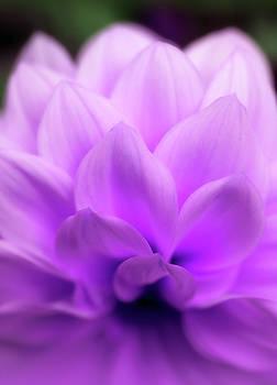 Breathtaking Purple Beauty by Johanna Hurmerinta