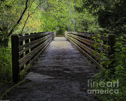 Bridge In The Trees by Mitch Shindelbower