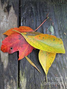 Bright Beauti Fall Autumn by Anne Ditmars