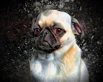 Bright Eye Pug Portrait by Scott Wallace Digital Designs