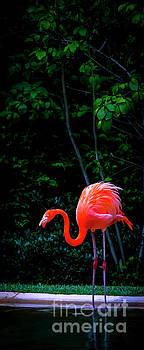 Bright Flamingo by Marina McLain
