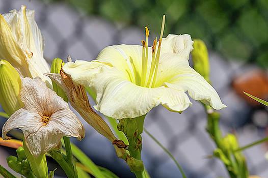 Bright Flower by David Stasiak