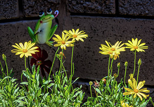 Bright Lights Yellow African Daisy and Frog by Debra Martz