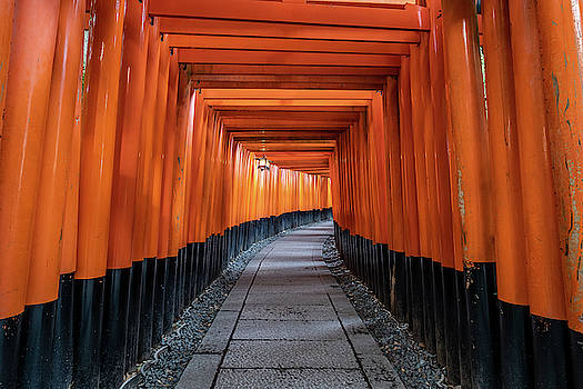 Bright orange torii gates in Kyoto, Japan by Ian Robert Knight