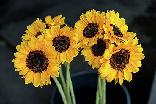 Bright Yellow Sunflowers by Ian Robert Knight