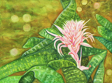 Bromeliadf by Dorothy Riley