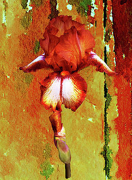 Bronze Watercolor Iris by Linda Cox