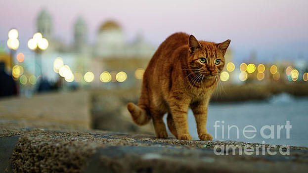 Brown Cat and Cathedral by the Sea Cadiz Spain by Pablo Avanzini