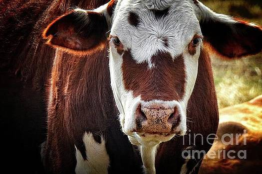 Brown Cow - country prints by Ella Kaye Dickey