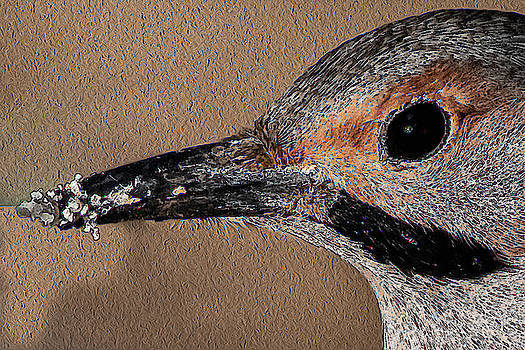 Brown Creeper by Gary E Snyder