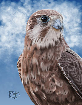 Brown Falcon by Robert Bovasso