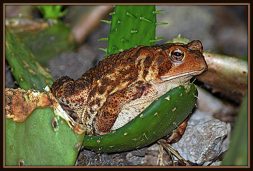 Brown Frog With Cacti by Constance Lowery