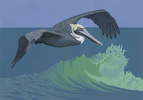 Brown Pelican by Nathan Marcy