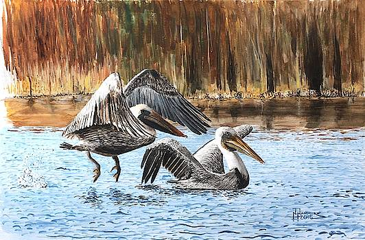 Brown Pelicans by Nelson Hammer