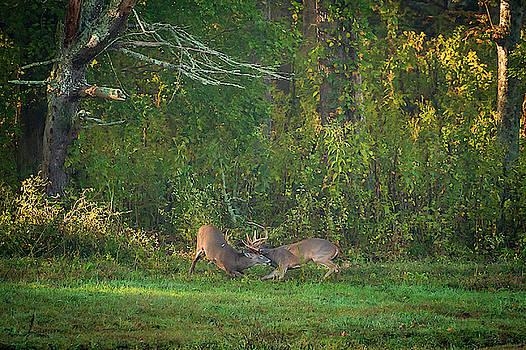 Buck Battle by Jeff Phillippi