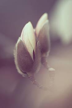 Jenny Rainbow - Buds of Zen Magnolia