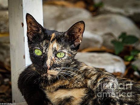 Budva Cat by Mitch Shindelbower