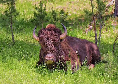 Buffalo Breather by John M Bailey