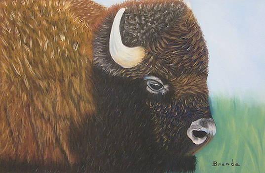 Buffalo by Brenda Maas