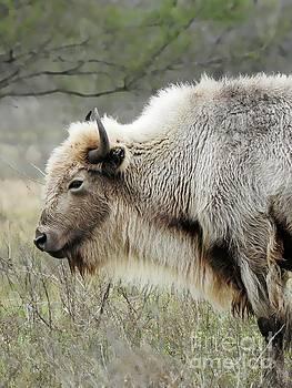 Buffalo Legend by Ella Kaye Dickey