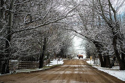 Buffalo Road by James BO Insogna