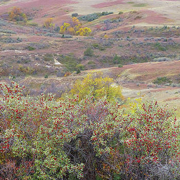 Buffaloberry Prairie by Cris Fulton