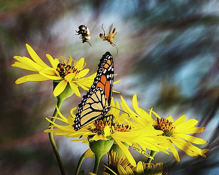 Bug Landing by Jayne Gohr