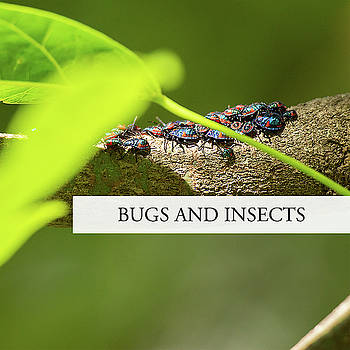 Bugs and Insects by Rob D Imagery