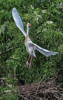 Building a Nest by Jeffrey Klug
