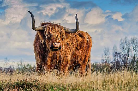 Bull by Mim White