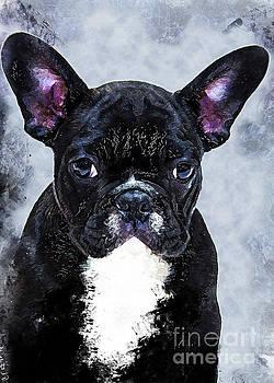 Bulldog dog by Justyna JBJart