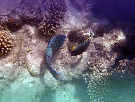 Bullethead Parrotfish And Orangespine Unicornfish by Johanna Hurmerinta