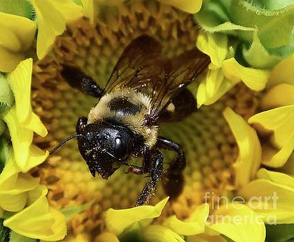 Cindy Treger - Bumble Bee And The Sunflower