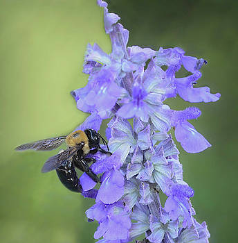 Bumble Bee at Work by Mary Lynn Giacomini