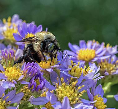 Peter Ciro - Bumble Bee on Flowers - Atlanta Botanical Garden