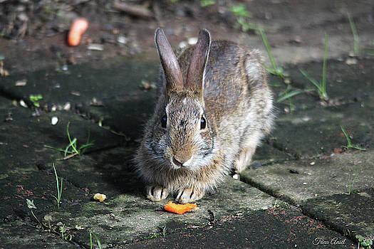 Bunny Wants a Carrot by Trina Ansel