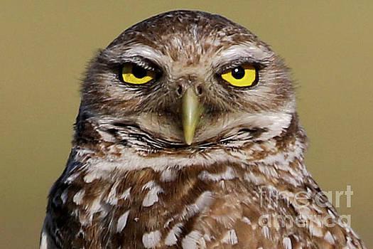 Burrowing Owl Close-up by Meg Rousher