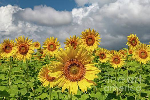 Dale Powell - Bursting Forth Sunshine