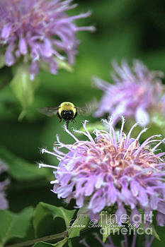 Busy As A Bee by Laura Birr Brown