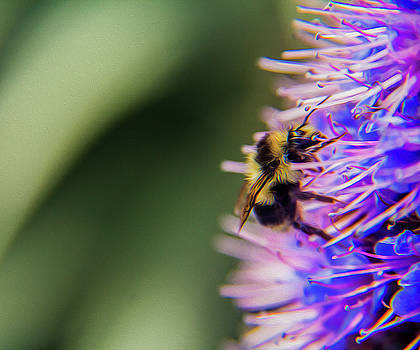 Busy bee by Stuart Manning