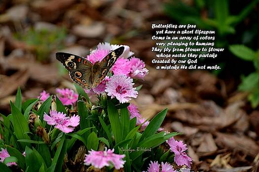 Butterflies Are Free with Poem by Carolyn Hebert
