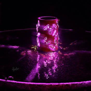 Sharon Popek - Butterflies at Night