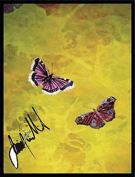 Butterflies by Jimmy Williams